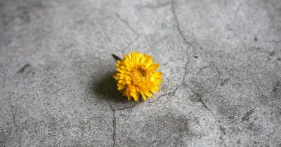 Pantone's Colors of the Year for 2021 gray background and yellow flower